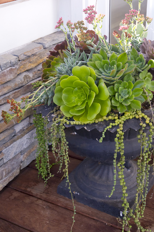 Succulents are low maintenance. Place them in a vintage black urn next to your front door and forget about them! @DL Rhein