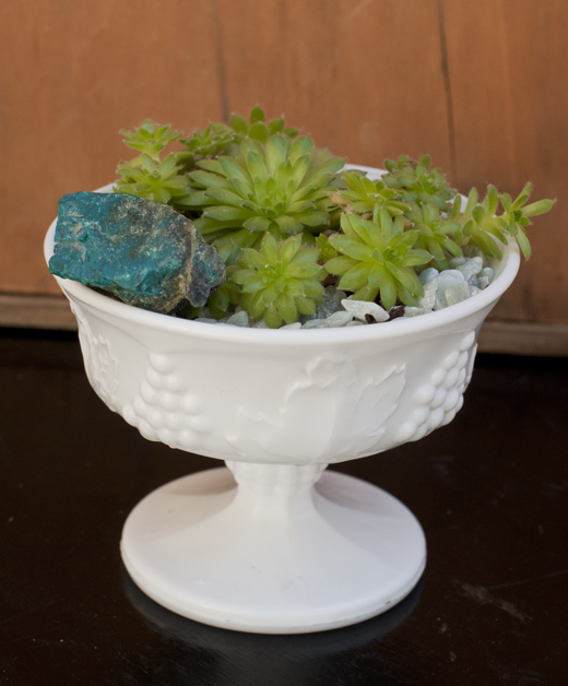 Vintage Vessels are a perfect home for fresh succulents | D.L. Rhein