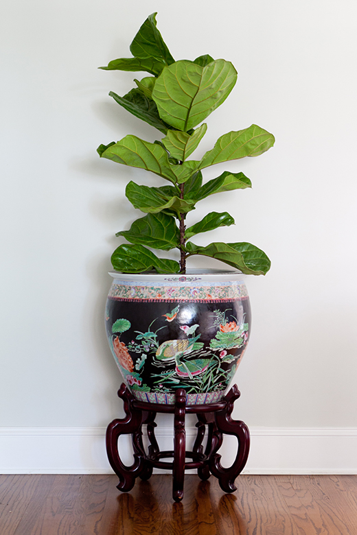 Vintage Chinoiserie Planter with Fig Leaf | Cheviot Hills | D.L. RHEIN